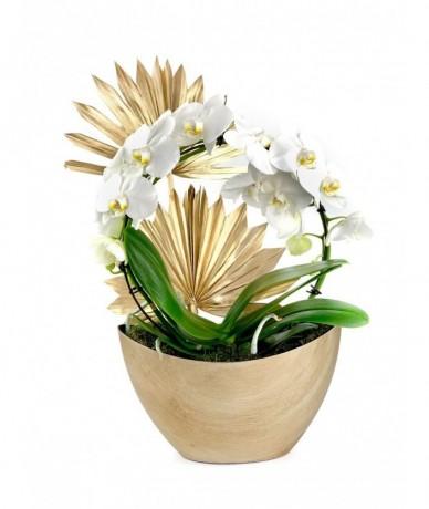 Cserepes Phalaenopsis orchidea beültetés - ajándékküldés