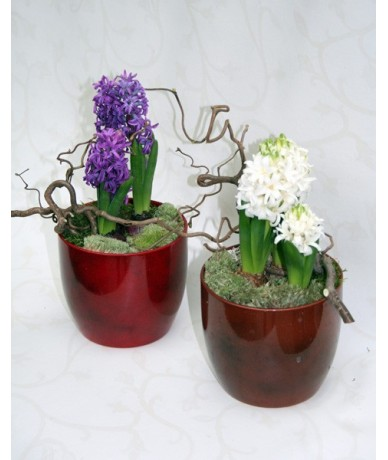 Hyacinths decorated with twigs