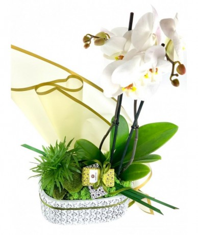 Phalaenopsis orchid and 2 organic Manna soaps