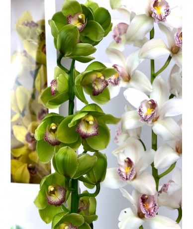 Orchid in an elegant white box