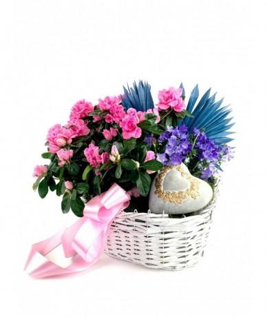 Egy kosárnyi színkavalkád gyönyörű tavaszi cserepes virágokból