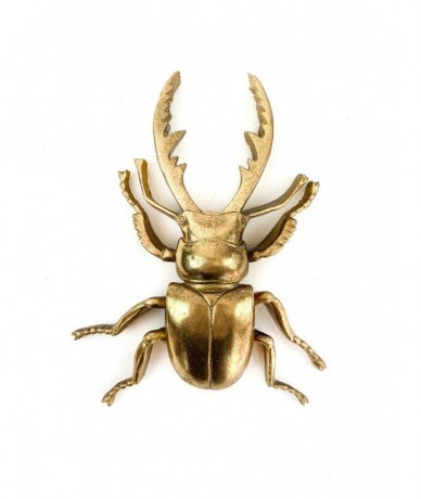 Giant gold stag beetle - gifts for men