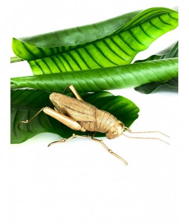 Giant gold grasshopper - gifting design
