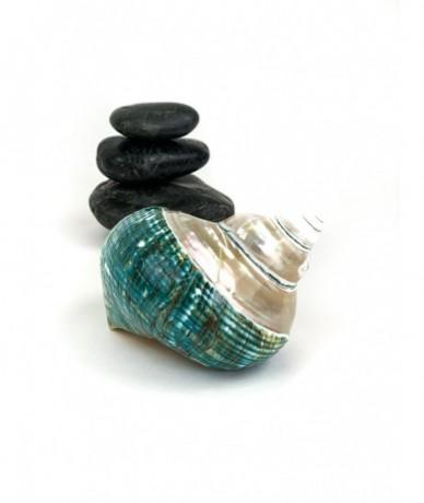 Large ornate ceramic seasnail