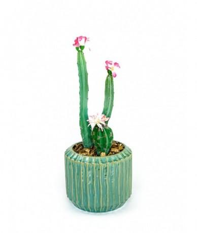 Műnövény dekoráció modern formában, műkaktusszal, kerámia kaspóban