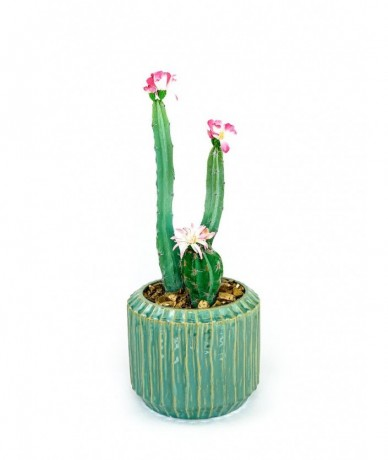 Artificial cactus in plant pot - office gift