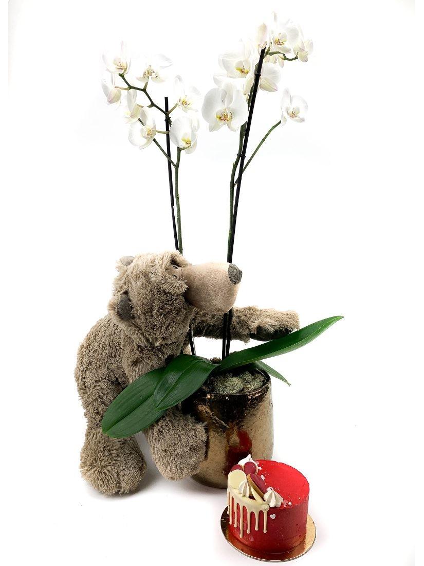 Luxus ajándékcsomag, benne cserepes orchidea, mini torta és plüssmackó