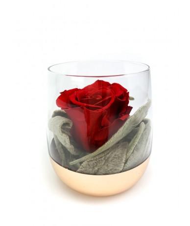 Vermont Velvet Rose