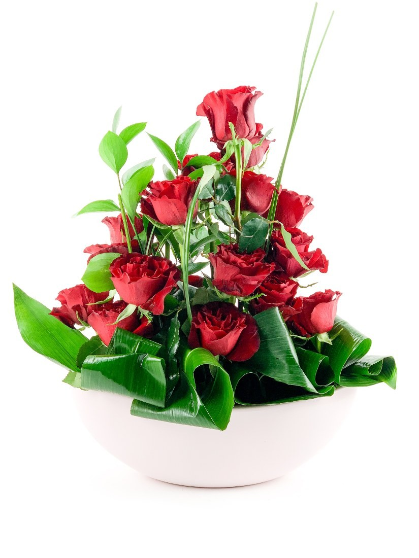 Stunning composition of burning red roses