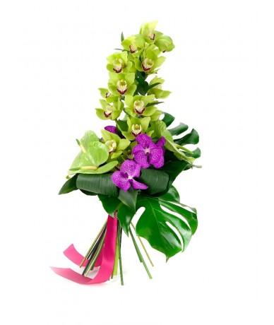 Egy szál csónakorchidea vanda orchidea fejekkel, a letisztult elegancia kedvelőinek