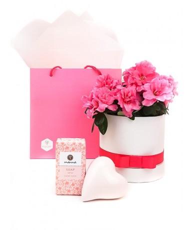 Virágdobozban rózsaszín azálea