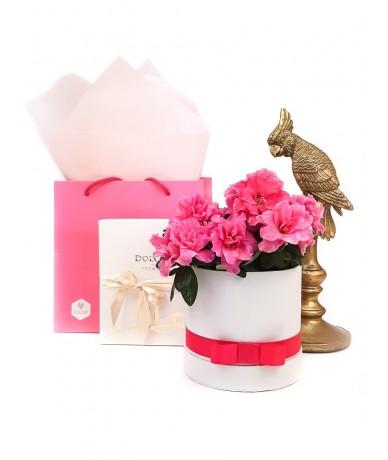 Virágdobozban rózsaszín azálea, papagájjal