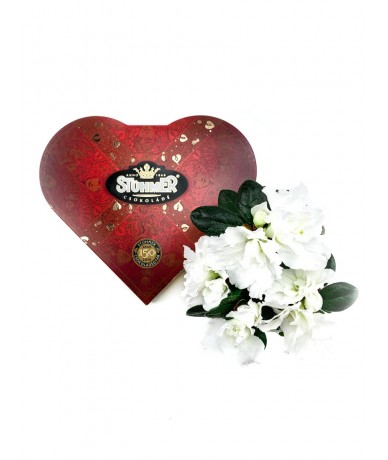Heart-shaped Stühmer chocolate box and the mini azalea in golden pot