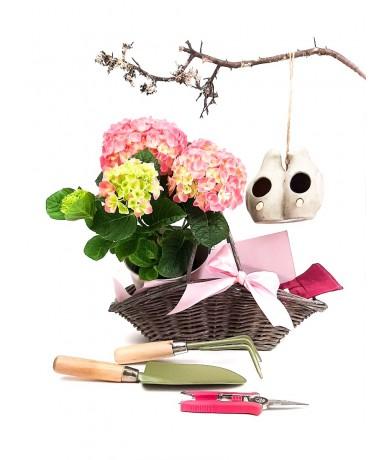 Creative gift basket with hydrangea, garden tools and gloves, ceramic bird feeder in a basket.