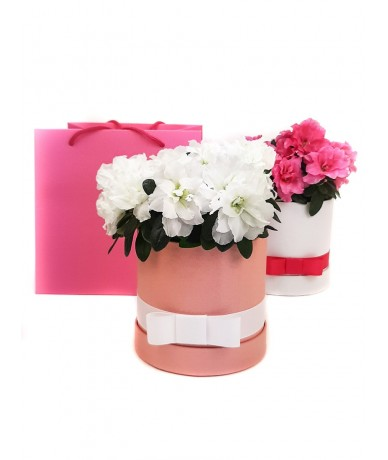 Azaleas in flower box for Mother's Day