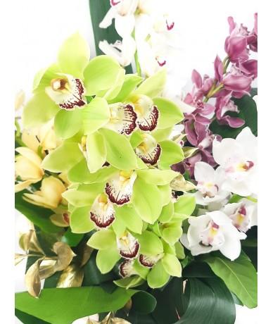 Huge box of cymbidium orchids in gold box