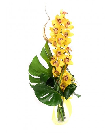 Stem of nicely decorated, splendid cymbidium orchid