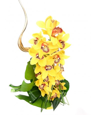 Stem of nicely decorated, splendid cymbidium orchid