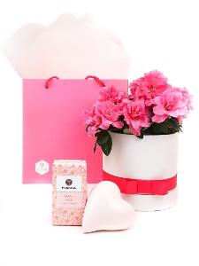 Anyák napi azálea ajándékcsomag