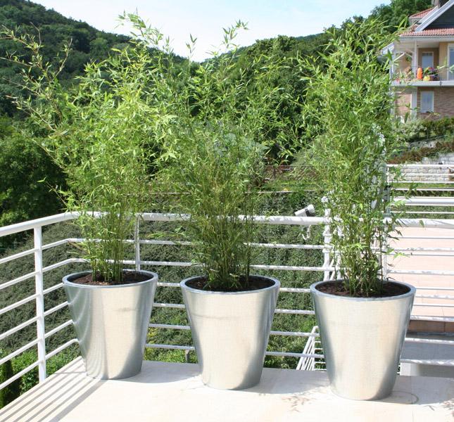 Bambusz teraszra